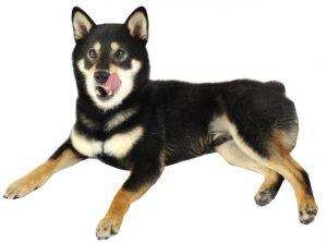 犬と生肉の相性