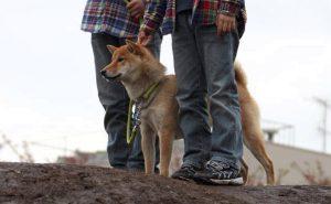 日本犬の欲求