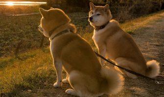 柴犬が誘う寡黙の美学。ニッポンの犬と男は背中で語れ!