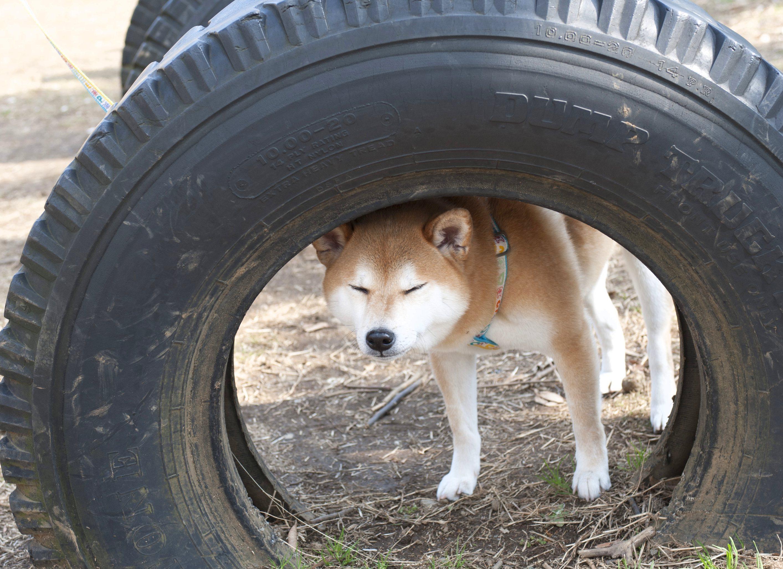 うんち か たい 犬
