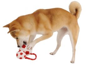 柴犬と子供の相性