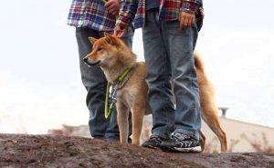 犬と子供の接し方