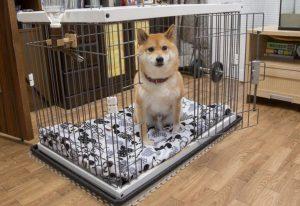 犬のパニック対策
