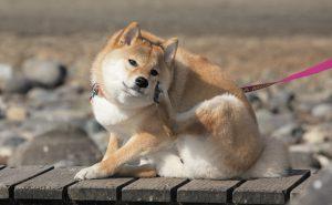 犬が掻く原因