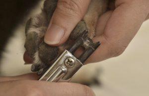 犬の爪きり