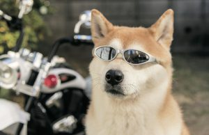 犬の反抗期