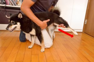 alongamento patas traseiras