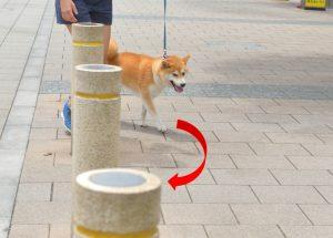 exercícios durante a caminhadas para cães