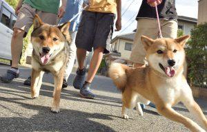犬の老化防止