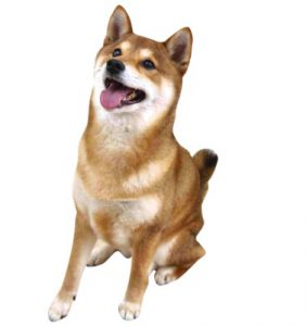 犬の副腎皮質ステロイド薬