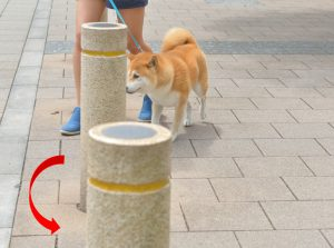slalon para cães