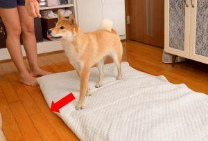 exercícios na sala para cães