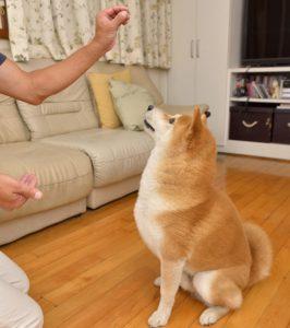 fortalecimento em cães