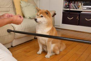 exercícios para cães de trabalho