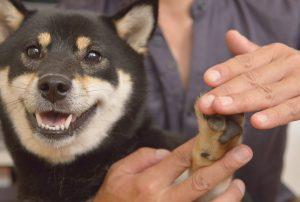 alongamento das patas dos cães