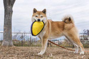 フリスビー 犬