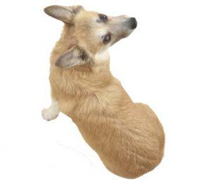 注意したい犬の症状