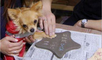 【犬とアクティビティ体験】愛犬と一緒に楽しめる陶芸体験で思い出作り