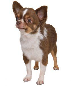 犬の東洋医学