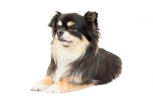 犬のPTSD