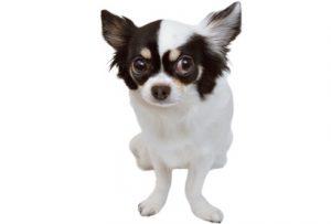 犬の精神障害 Ptsdの症状は 恐怖心とのつきあい方を徹底解明 Shi