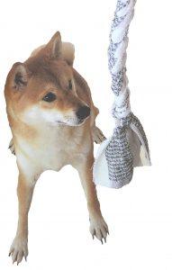 犬の手作りオモチャ