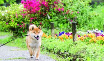 犬を思わず連れ出したくなる!体にも心にもいい飼い主サイドの散歩の効果