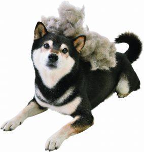 柴犬の抜け毛