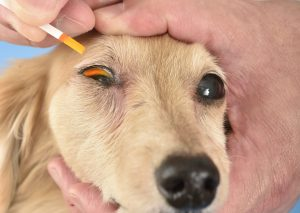 シニア犬の健康診断