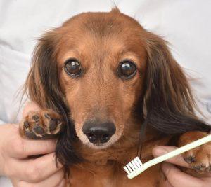 犬のデンタルケア