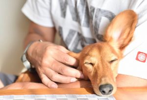 鳴く 犬 寝 ながら