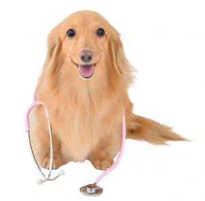 音でわかる犬の病気