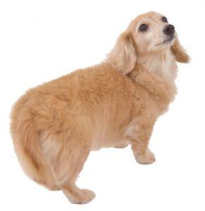 犬の健康トラブル