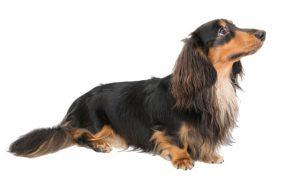 犬の年間スケジュール