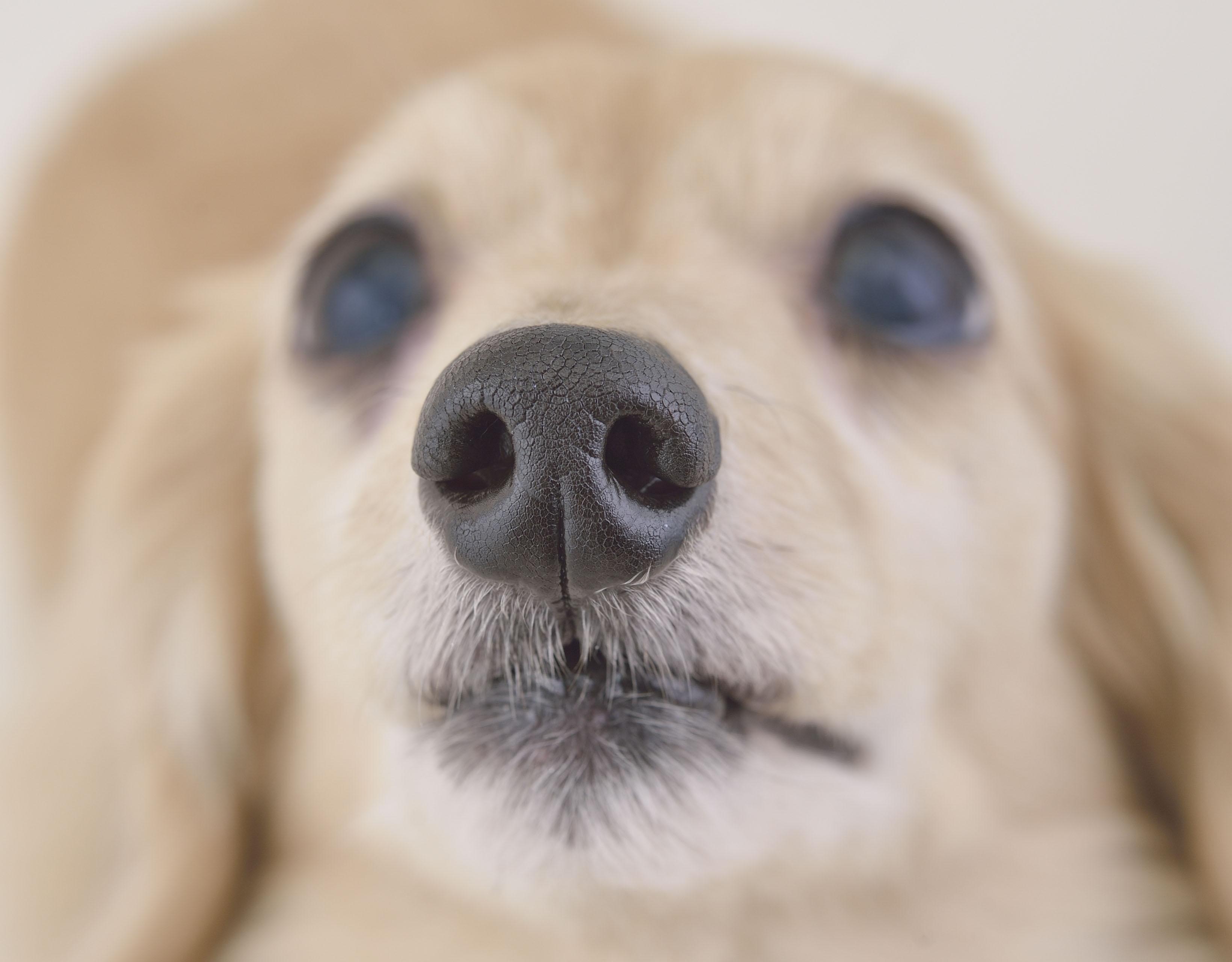 ペロペロ ない 犬 止まら