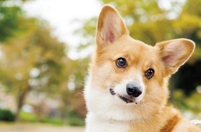 犬の生活サイクル