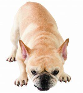 犬の医療費