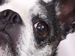ペチャの眼のトラブル