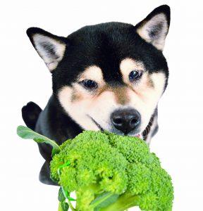 犬に与えても良い野菜
