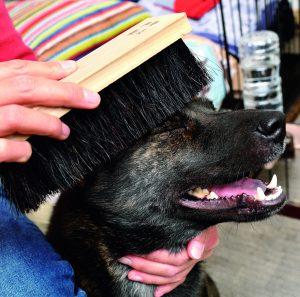 日本犬に多い皮膚疾患