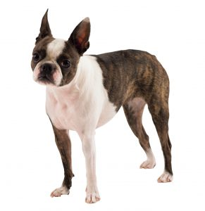 犬の応急処置