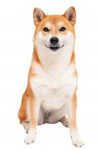 日本犬のほめ方